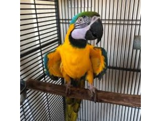 Adorable Macaw parrots looking for new homes.