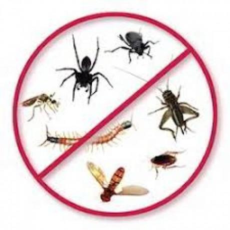 squeak-pest-control-brisbane-big-0