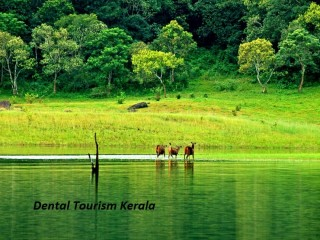 Affordable Dental Tourism in Kerala