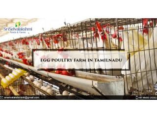 Egg Poultry Farm in Tamilnadu | Egg Manufacturers Namakkal
