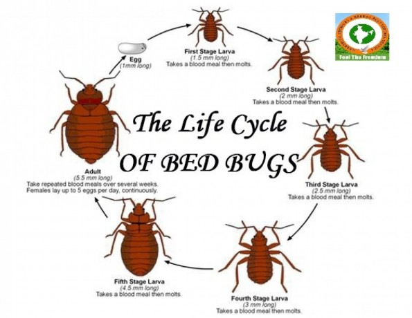 bed-bugs-control-service-big-0