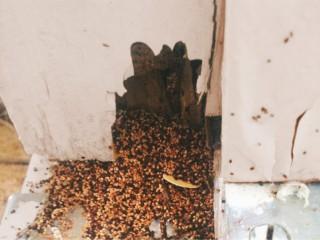BIOCHEM pest control Trichy