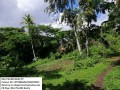 57-hectares-agri-lot-for-sale-small-1