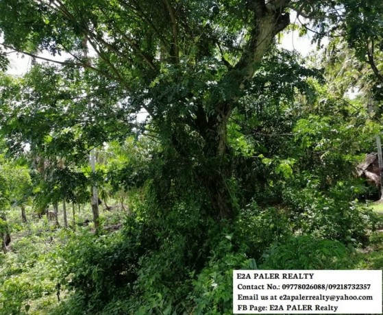 57-hectares-agri-lot-for-sale-big-2