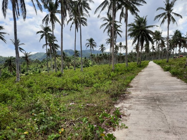 5hectares-lot-beach-front-for-sale-big-1