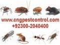 wildlife-control-services-emergency-service-small-1