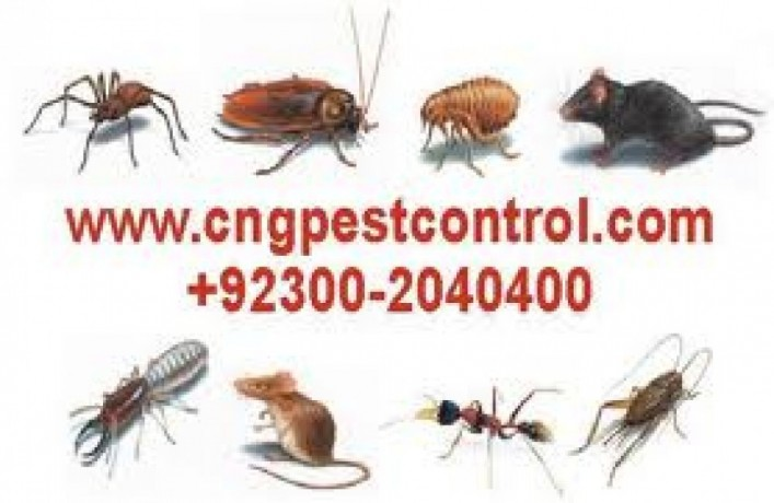 wildlife-control-services-emergency-service-big-1