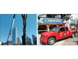 Commercial Tree Services in Charlotte, NC