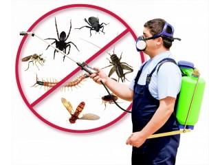 Pest Control Services Miami Dade FL