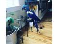 hyacinth-macaw-small-0