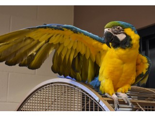 Xmas Talking Macaw Birds For Families