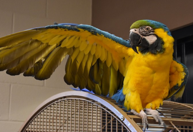 xmas-talking-macaw-birds-for-families-big-0