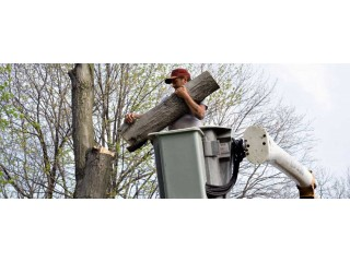 Tree Service In Loganville | Tree Removal Services