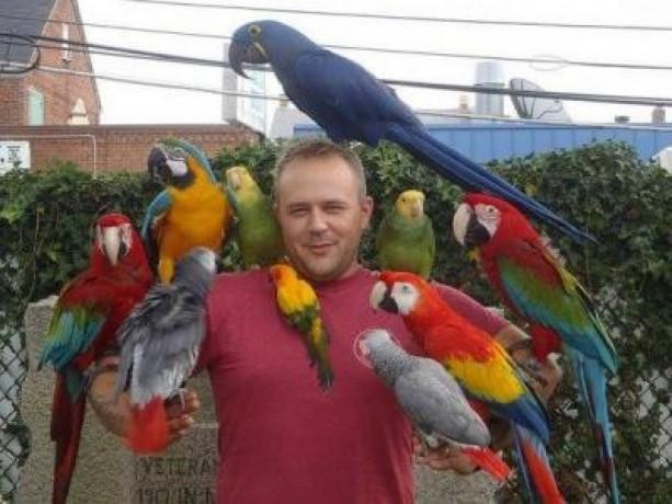 talking-cockatoo-parrotsgrey-parrotsamazonmacaws-big-0