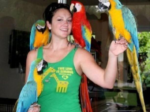 macaw-parrots-big-0