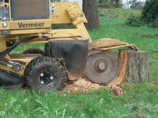 Tree Removal In Covington | Tree and Stump services