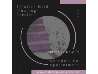Mold Cleaning Service