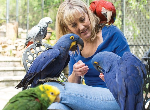 adult-and-baby-macaw-parrots-for-sale-big-0