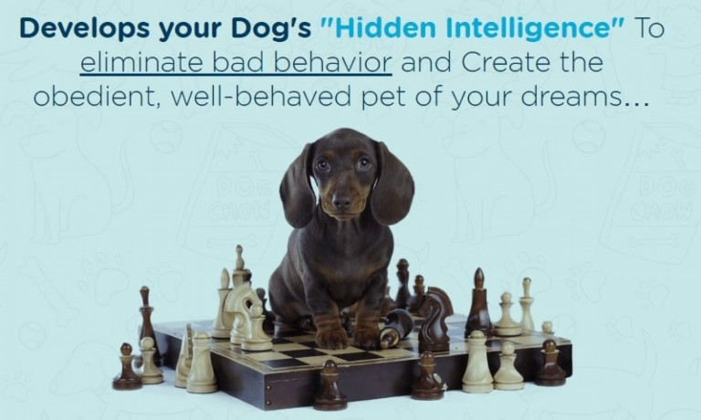 brain-training-for-dogs-unique-dog-training-big-0