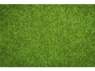 Artificial grass landscapers Davis Islands